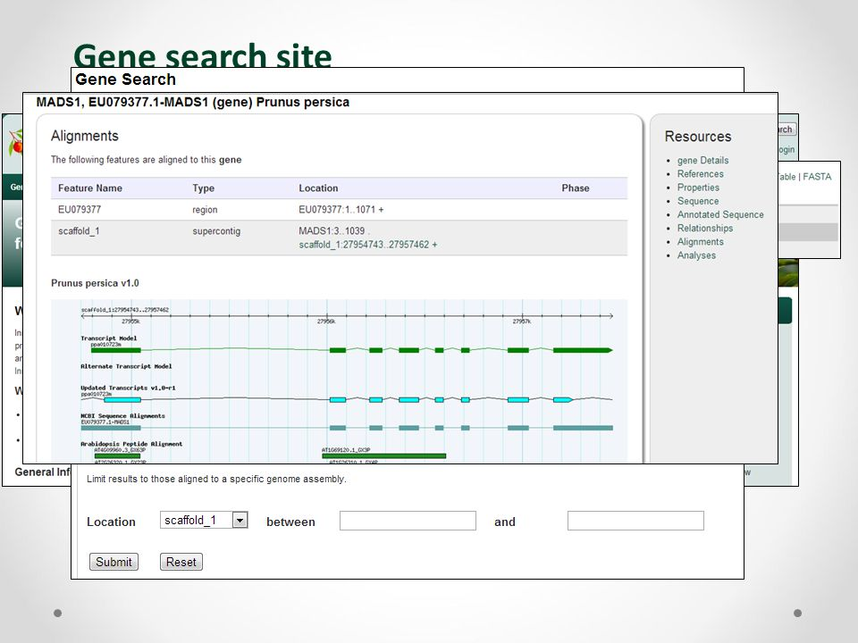 Gene search site