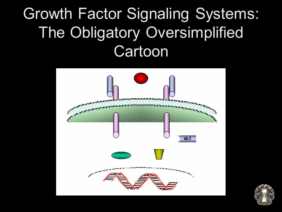 Growth Factor Signaling Systems: The Obligatory Oversimplified Cartoon