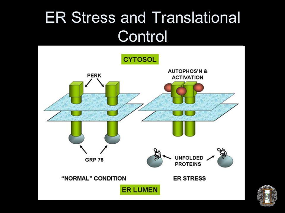ER Stress and Translational Control