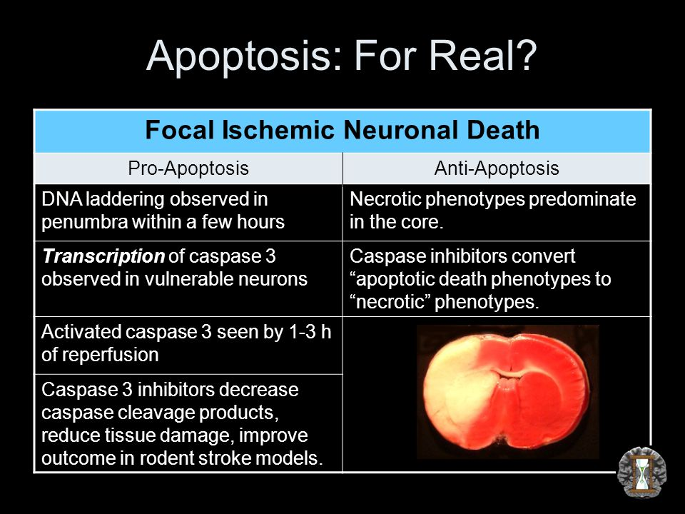 Apoptosis: For Real.