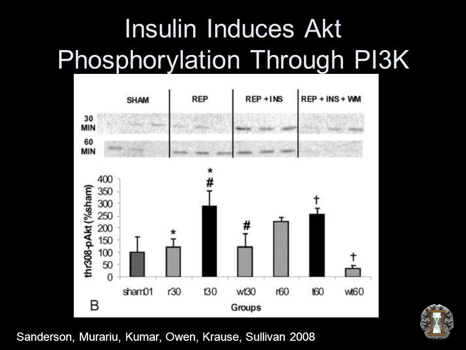 Insulin Induces Akt Phosphorylation Through PI3K Sanderson, Murariu, Kumar, Owen, Krause, Sullivan 2008