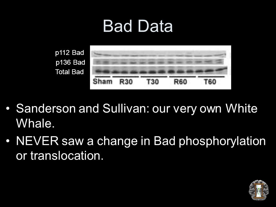 Bad Data Sanderson and Sullivan: our very own White Whale. NEVER saw a change in Bad phosphorylation or translocation. p112 Bad p136 Bad Total Bad