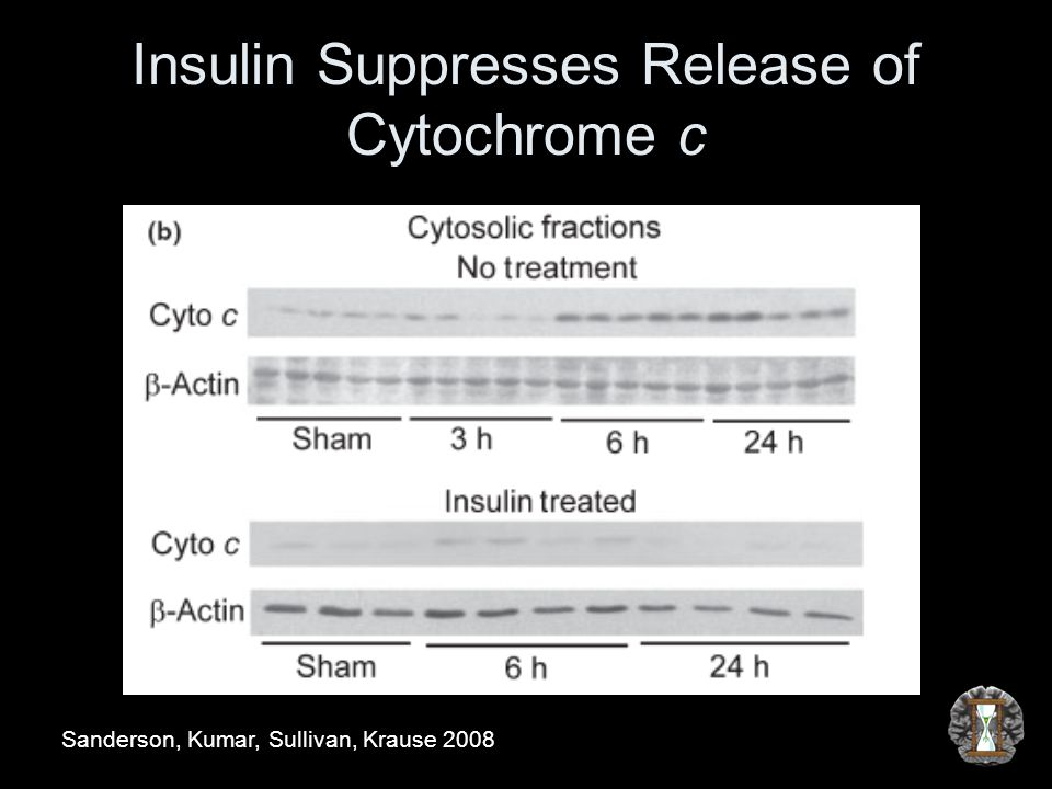 Insulin Suppresses Release of Cytochrome c Sanderson, Kumar, Sullivan, Krause 2008