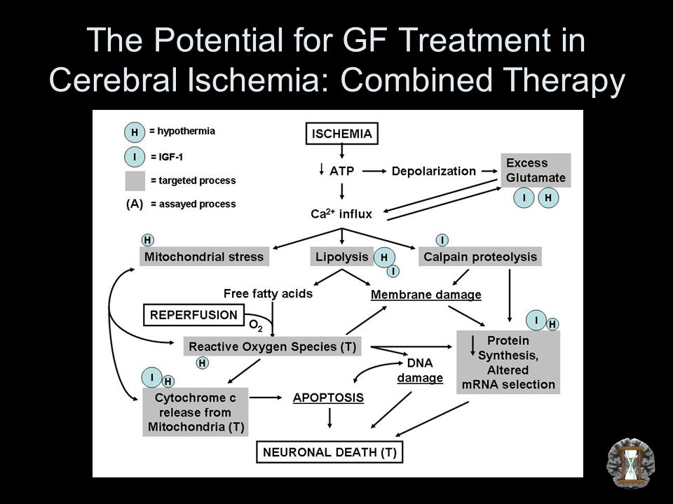 The Potential for GF Treatment in Cerebral Ischemia: Combined Therapy