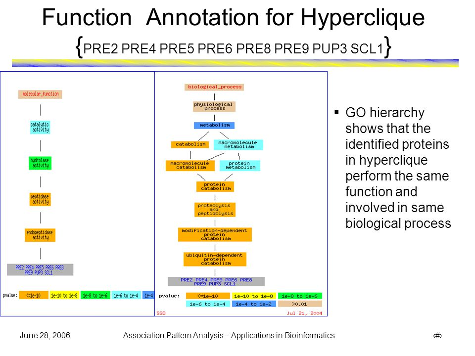 June 28, 2006 Association Pattern Analysis – Applications in Bioinformatics 15 Function Annotation for Hyperclique { PRE2 PRE4 PRE5 PRE6 PRE8 PRE9 PUP3 SCL1 }  GO hierarchy shows that the identified proteins in hyperclique perform the same function and involved in same biological process