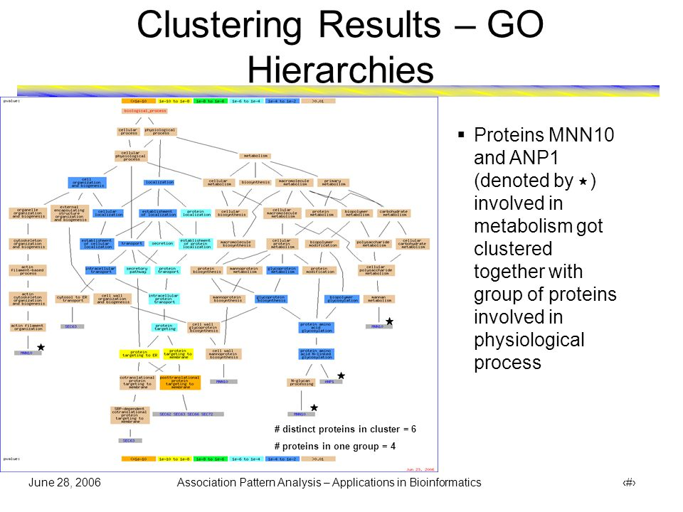 June 28, 2006 Association Pattern Analysis – Applications in Bioinformatics 28 Clustering Results – GO Hierarchies  Proteins MNN10 and ANP1 (denoted by ) involved in metabolism got clustered together with group of proteins involved in physiological process # distinct proteins in cluster = 6 # proteins in one group = 4