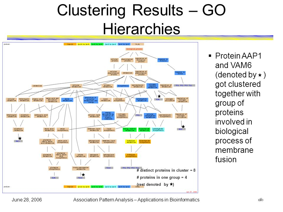 June 28, 2006 Association Pattern Analysis – Applications in Bioinformatics 34 Clustering Results – GO Hierarchies  Protein AAP1 and VAM6 (denoted by ) got clustered together with group of proteins involved in biological process of membrane fusion # distinct proteins in cluster = 8 # proteins in one group = 4 (rest denoted by )