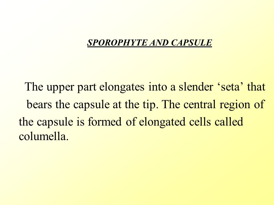 CONCEPTS. After fertlisation the diploid zygote produces the sporophyte.