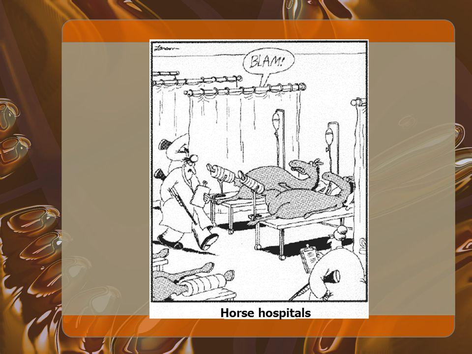 Horse hospitals