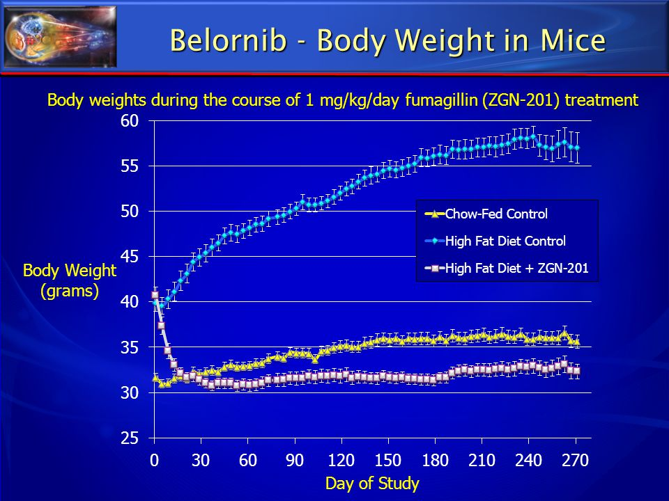 Belornib - Body Weight in Mice Body weights during the course of 1 mg/kg/day fumagillin (ZGN-201) treatment
