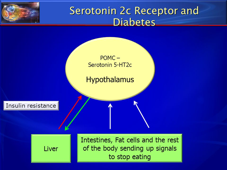 Serotonin 2c Receptor and Diabetes Intestines, Fat cells and the rest of the body sending up signals to stop eating Liver Insulin resistance POMC – Se