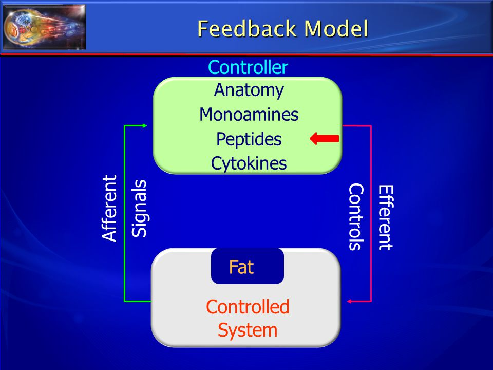 Controlled System Controller Afferent Signals Efferent Controls Fat Anatomy Monoamines Peptides Cytokines Feedback Model