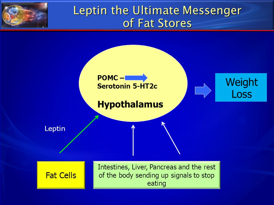 Leptin the Ultimate Messenger of Fat Stores Weight Loss Intestines, Liver, Pancreas and the rest of the body sending up signals to stop eating POMC –