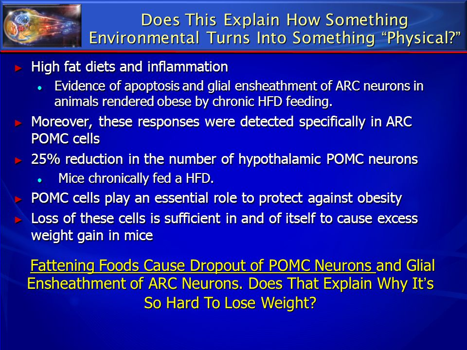 "Does This Explain How Something Environmental Turns Into Something ""Physical?"" ► High fat diets and inflammation ● Evidence of apoptosis and glial ens"