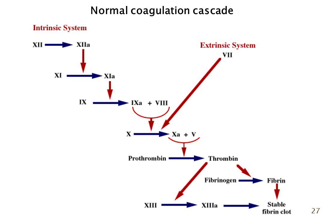 27 Normal coagulation cascade