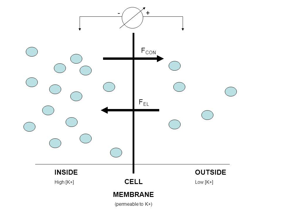 Factors Influencing Signal Measured (continued) Merletti et al.