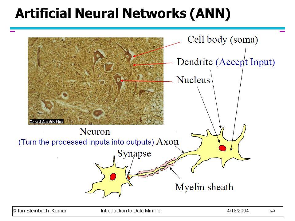 © Tan,Steinbach, Kumar Introduction to Data Mining 4/18/2004 17 Artificial Neural Networks (ANN)