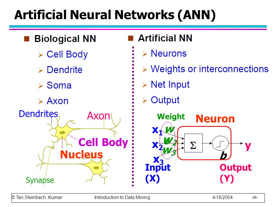 © Tan,Steinbach, Kumar Introduction to Data Mining 4/18/2004 19 Artificial Neural Networks (ANN) Axon Nucleus Cell Body Synapse Dendrites Output (Y) w