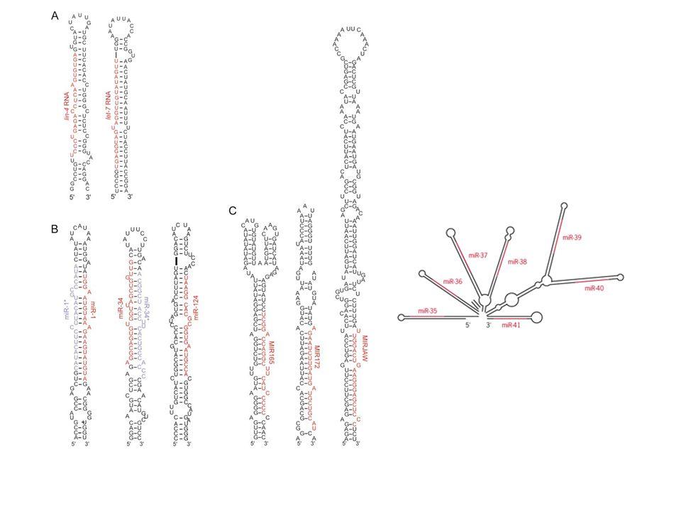 miR-26a is amplified in glioma.Huse J T et al. Genes Dev.