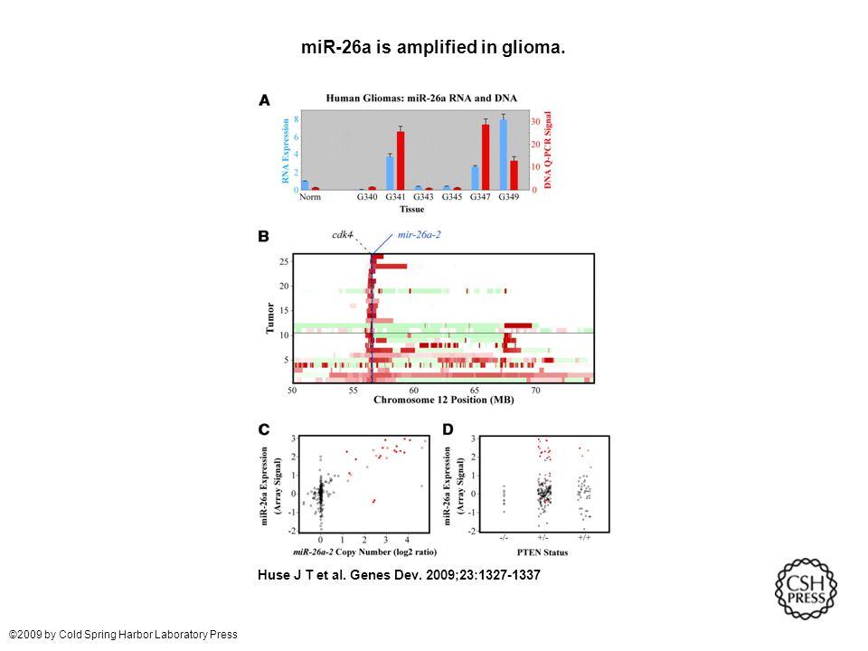 miR-26a is amplified in glioma. Huse J T et al. Genes Dev.