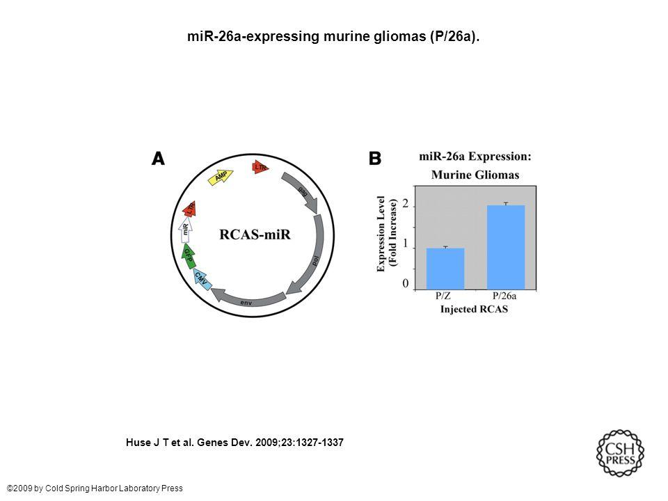 miR-26a-expressing murine gliomas (P/26a). Huse J T et al.