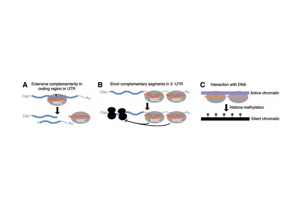 miR-26a-expressing murine gliomas (P/26a).Huse J T et al.