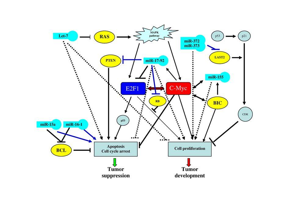 miR-26a facilitates gliomagenesis in vivo.Huse J T et al.