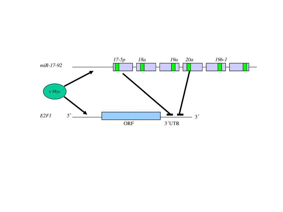 Table 1 The role of microRNAs in cancers microRNAsTumorigenesis miR-9Neuroblastoma miR-10bBreast cancer miR-15, miR-15aLeukemia, pituitary adenoma miR-16, miR-16-1Leukemia, pituitary adenoma miR-17-5p, miR-17-92Lung cancer, lymphoma miR-20aLymphoma, lung cancer miR-21Breast cancer, cholangiocarcinoma, head & neck cancer, leukemia, cervical cancer, Pancreatic cancer miR-29, miR-29bLeukemia, cholangiocarcinoma miR-31Colorectal cancer miR-34aPancreatic cancer, Neuroblastoma miR-96Colorectal cancer miR-98Head & neck cancer miR-103Pancreatic cancer miR-107Leukemia, pancreatic cancer miR-125a, miR-125bNeuroblastoma, breast cancer miR-128Glioblastoma miR-133bColorectal cancer miR-135bColorectal cancer miR-143Colon cancer, cervical cancer miR-145Breast cancer, colorectal cancer miR-146Thyroid carcinoma miR-155Breast cancer, leukemia, pancreatic cancer miR-181, miR-181a, miR-181cLeukemia, glioblastoma, thyroid carcinoma miR-183Colorectal cancer miR-184Neuroblastoma miR-196a-2Pancreatic cancer miR-221Glioblastoma, thyroid carcinoma, Pancreatic cancer miR-222Thyroid carcinoma miR-223Leukemia miR-301Pancreatic cancer miR-376Pancreatic cancer let-7, let-7a, let-7a-1, let-7a-3Lung cancer, colon cancer Mol Cancer.