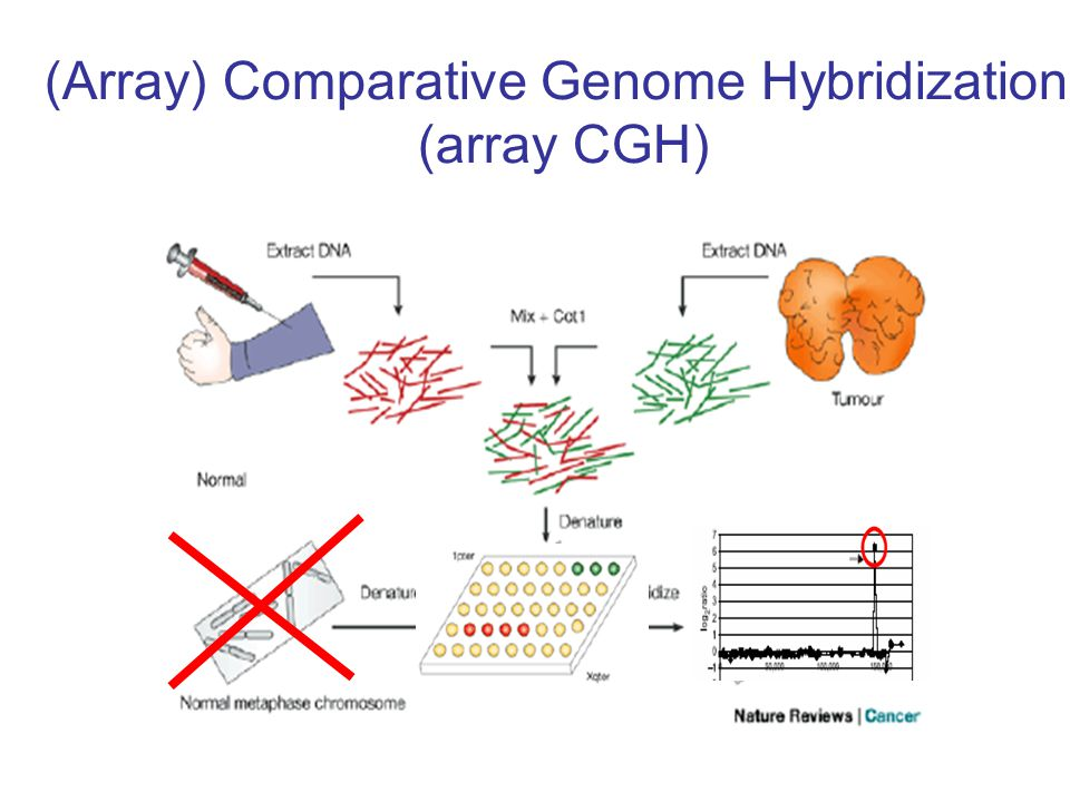 (Array) Comparative Genome Hybridization (array CGH)