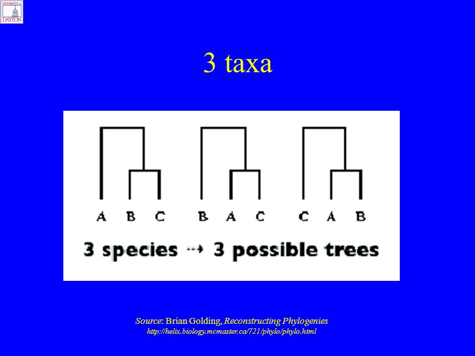 3 taxa Source: Brian Golding, Reconstructing Phylogenies http://helix.biology.mcmaster.ca/721/phylo/phylo.html