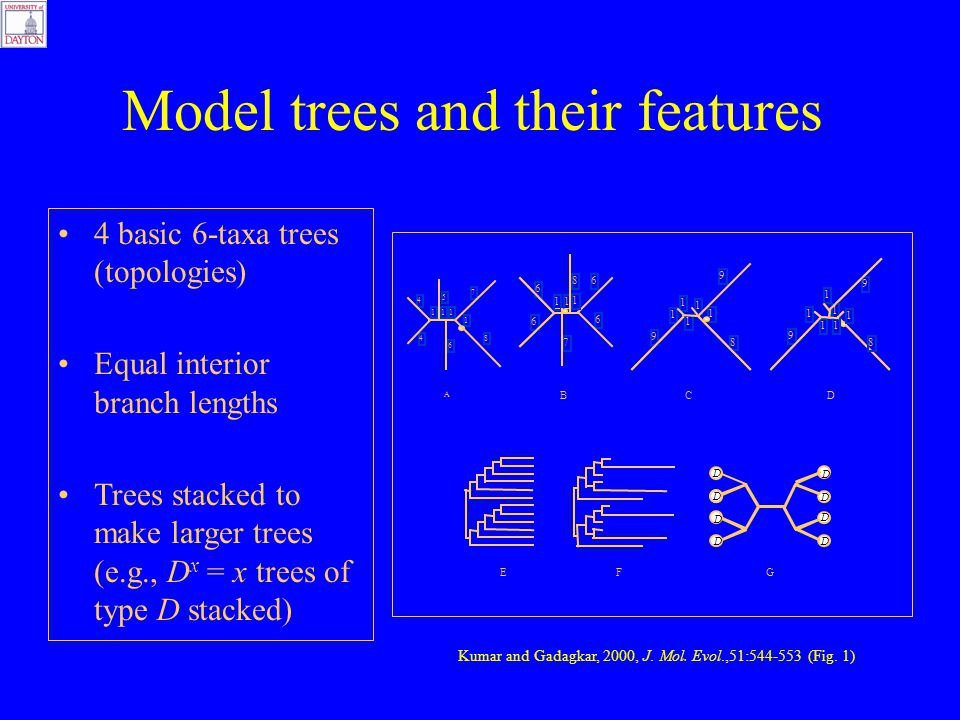 4 basic 6-taxa trees (topologies) Equal interior branch lengths Trees stacked to make larger trees (e.g., D x = x trees of type D stacked) Model trees and their features EFG D D D D D D D D BD 8 9 9 1 1 1 1 1 1 C 8 1 1 1 1 9 9 1 11 1 6 6 7 8 6 6 A 111 4 4 6 5 7 8 1 Kumar and Gadagkar, 2000, J.