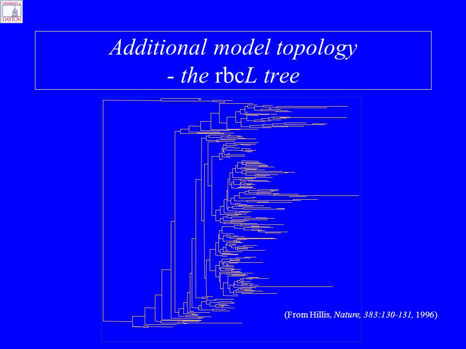 Additional model topology - the rbcL tree (From Hillis, Nature, 383:130-131, 1996)