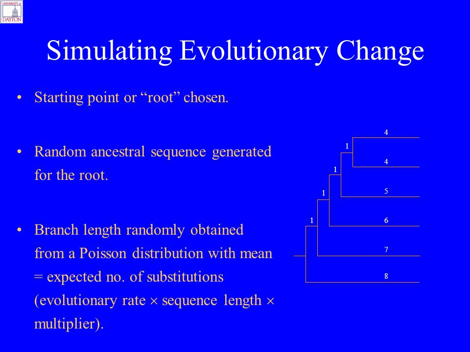 Simulating Evolutionary Change Starting point or root chosen.