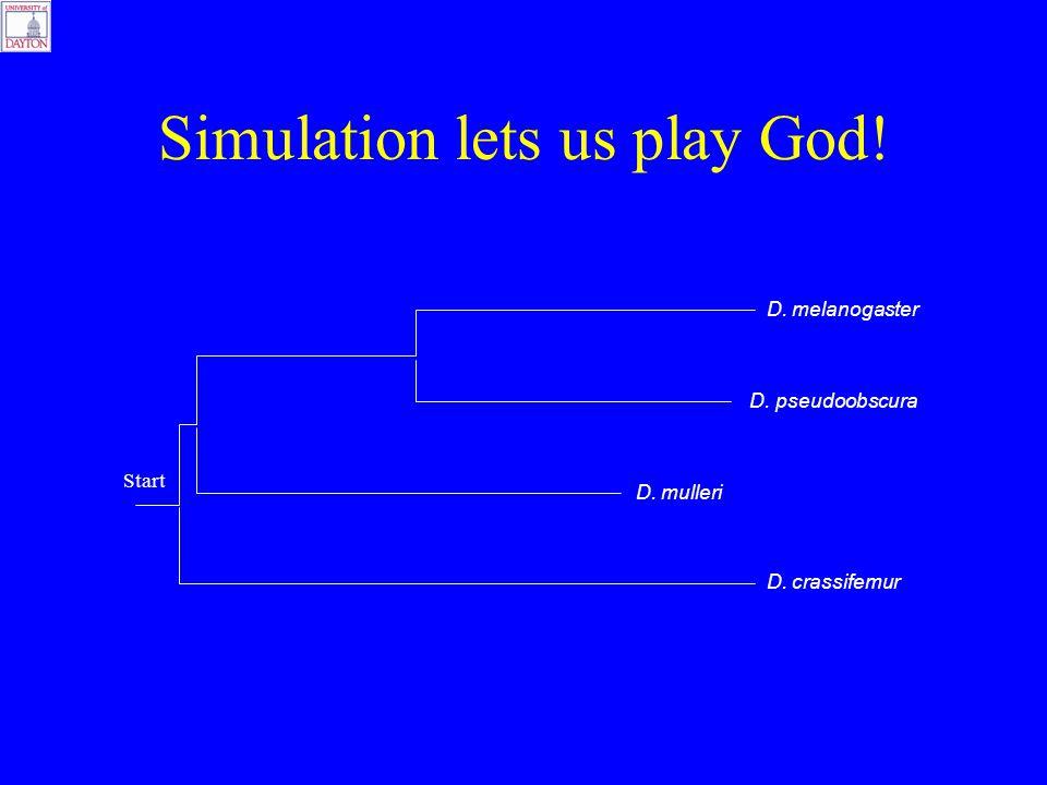 Simulation lets us play God! D. melanogaster D. pseudoobscura D. mulleri D. crassifemur Start