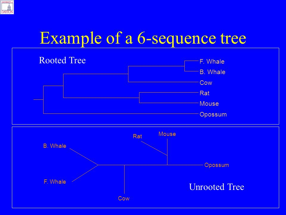 Example of a 6-sequence tree F. Whale B. Whale Cow Rat Mouse Opossum F.
