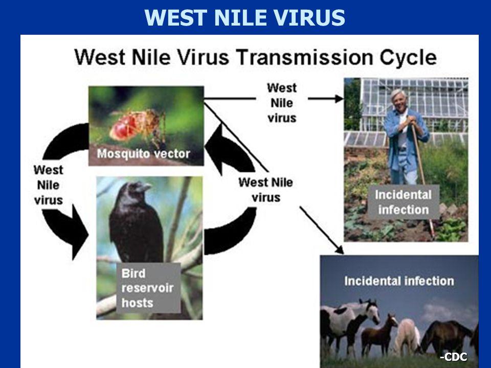 -CDC WEST NILE VIRUS