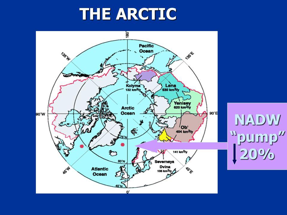 THE ARCTIC NADW pump 20%