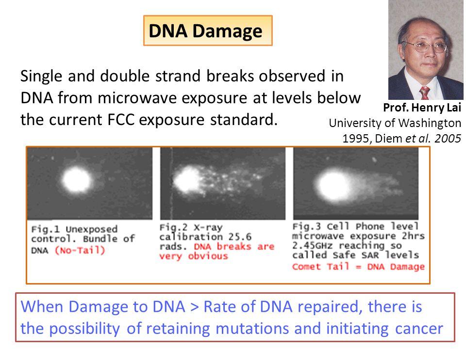 DNA Damage Prof. Henry Lai University of Washington 1995, Diem et al.