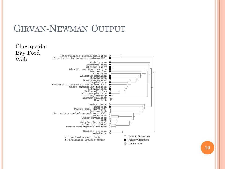 G IRVAN -N EWMAN O UTPUT 19 Chesapeake Bay Food Web