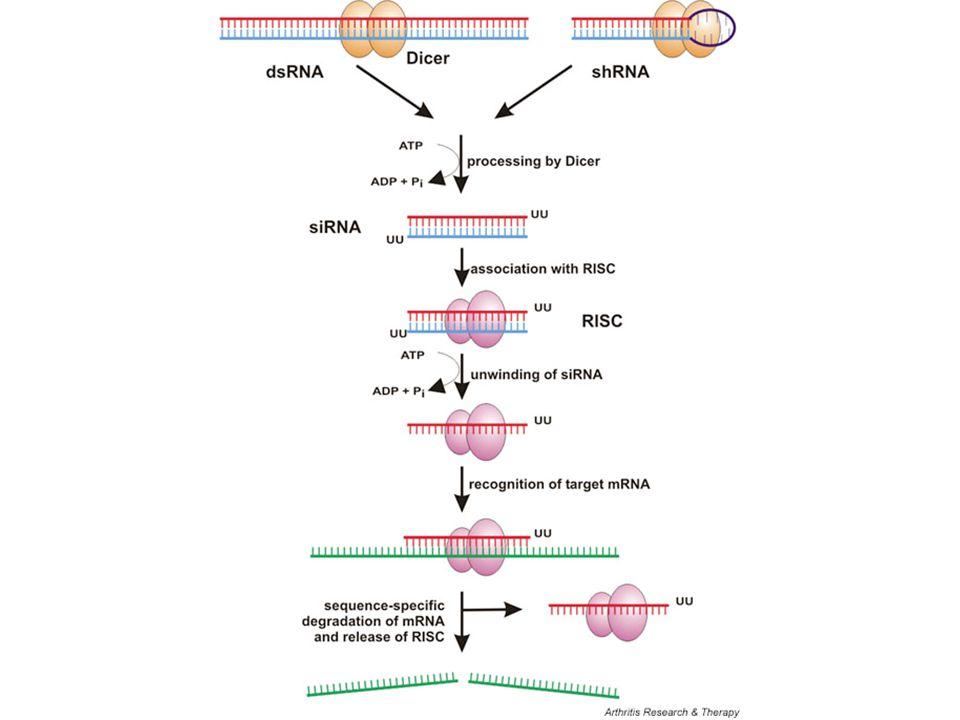 Let-7g impairs proliferation and enhances cell death.