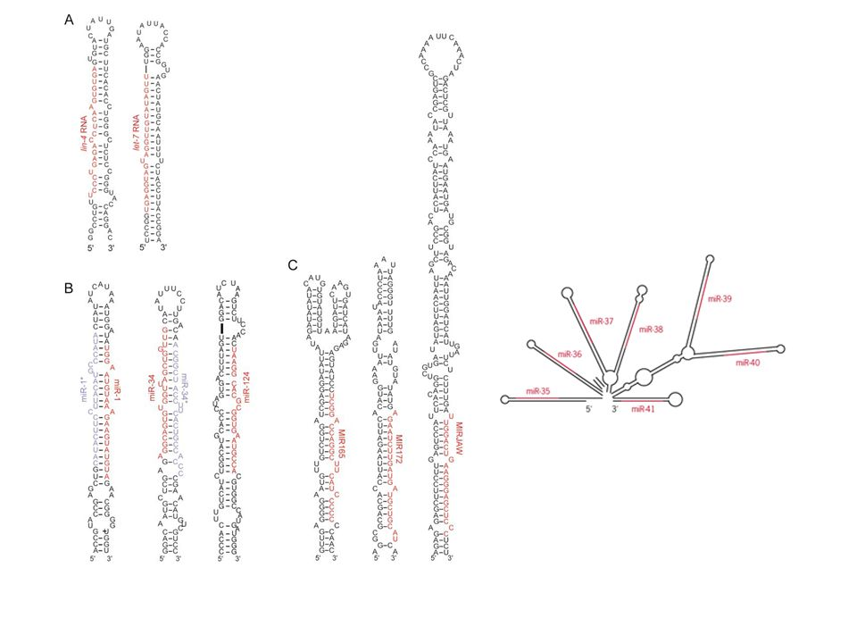 Kumar M S et al. PNAS 2008;105:3903-3908 ©2008 by National Academy of Sciences