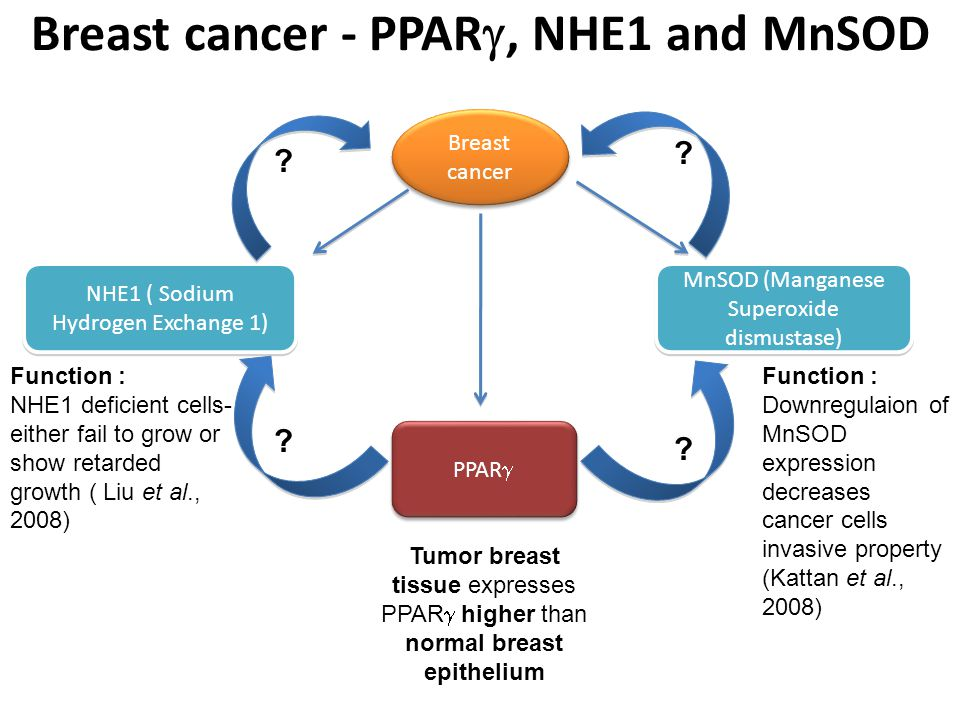 Breast cancer Tumor breast tissue expresses PPAR  higher than normal breast epithelium Breast cancer - PPAR , NHE1 and MnSOD PPAR  MnSOD (Manganese Superoxide dismustase) NHE1 ( Sodium Hydrogen Exchange 1) Function : NHE1 deficient cells- either fail to grow or show retarded growth ( Liu et al., 2008) Function : Downregulaion of MnSOD expression decreases cancer cells invasive property (Kattan et al., 2008) .