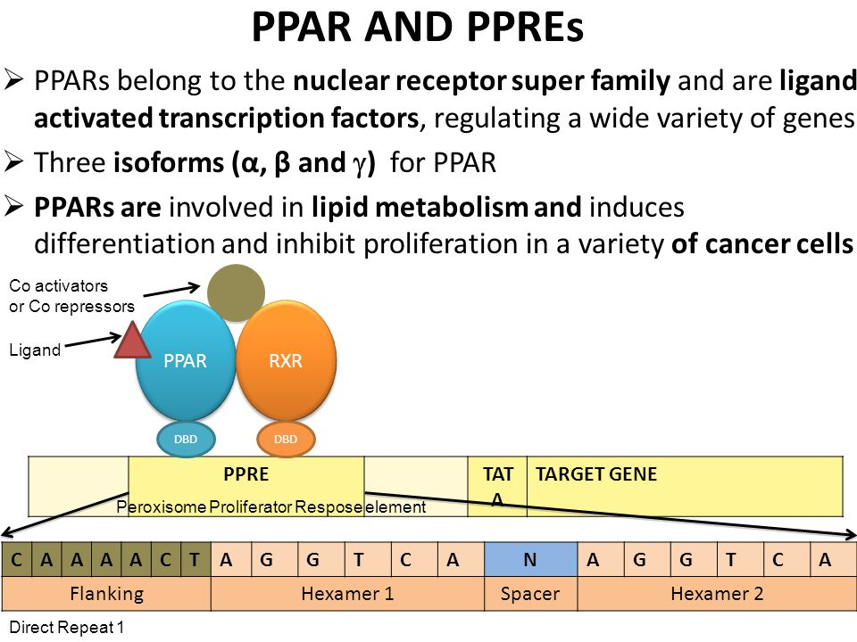 PPAR AND PPREs  PPARs belong to the nuclear receptor super family and are ligand activated transcription factors, regulating a wide variety of genes  Three isoforms (α, β and  ) for PPAR  PPARs are involved in lipid metabolism and induces differentiation and inhibit proliferation in a variety of cancer cells CAAAACTAGGTCANAGGTCA FlankingHexamer 1SpacerHexamer 2 PPAR PPRETAT A TARGET GENE RXR DBD Direct Repeat 1 Co activators or Co repressors Peroxisome Proliferator Respose element Ligand