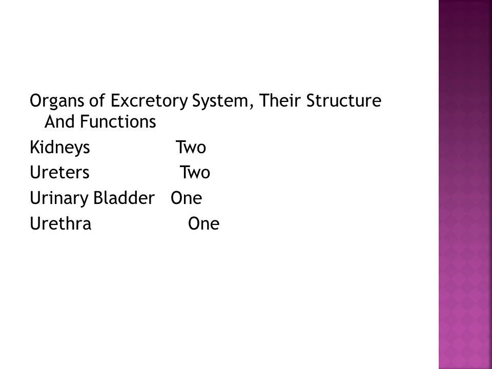 Organs of Excretory System, Their Structure And Functions Kidneys Two Ureters Two Urinary Bladder One Urethra One