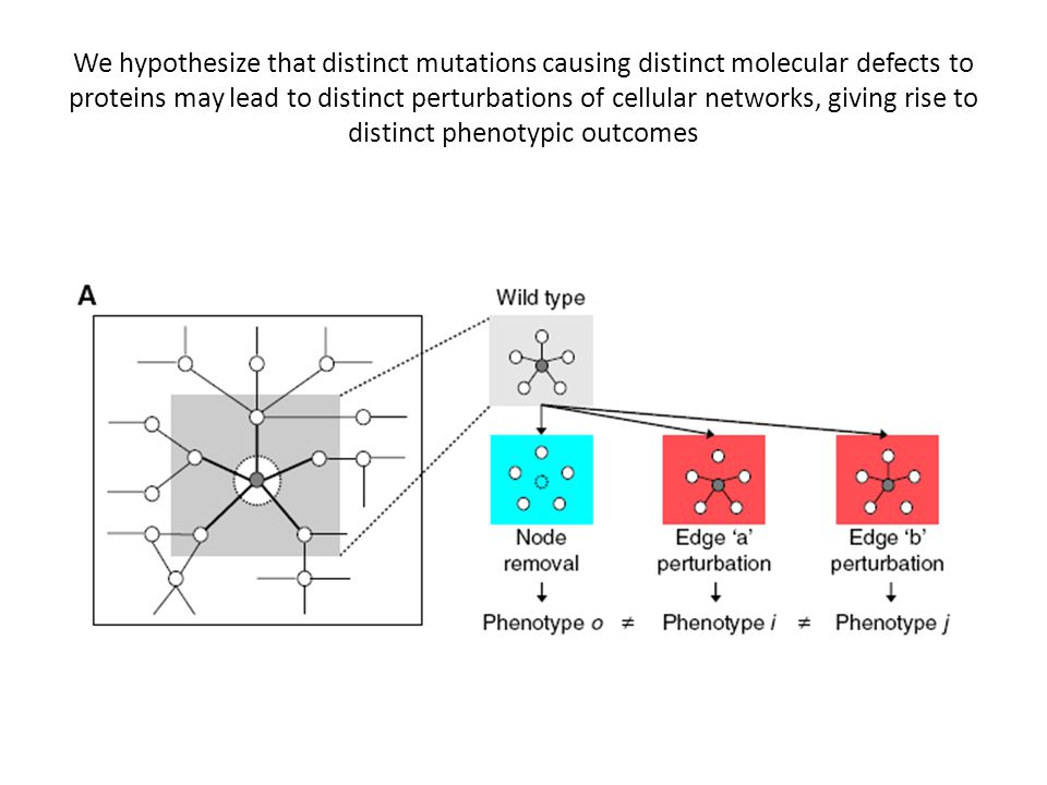 We hypothesize that distinct mutations causing distinct molecular defects to proteins may lead to distinct perturbations of cellular networks, giving rise to distinct phenotypic outcomes
