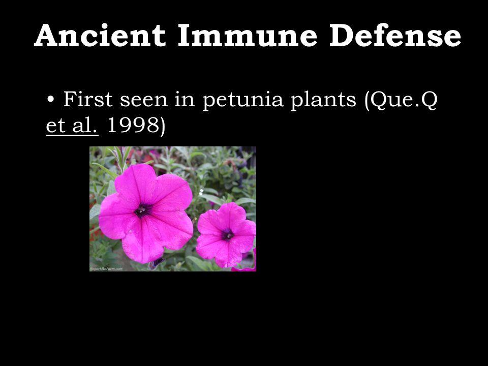 First seen in petunia plants (Que.Q et al. 1998) Ancient Immune Defense