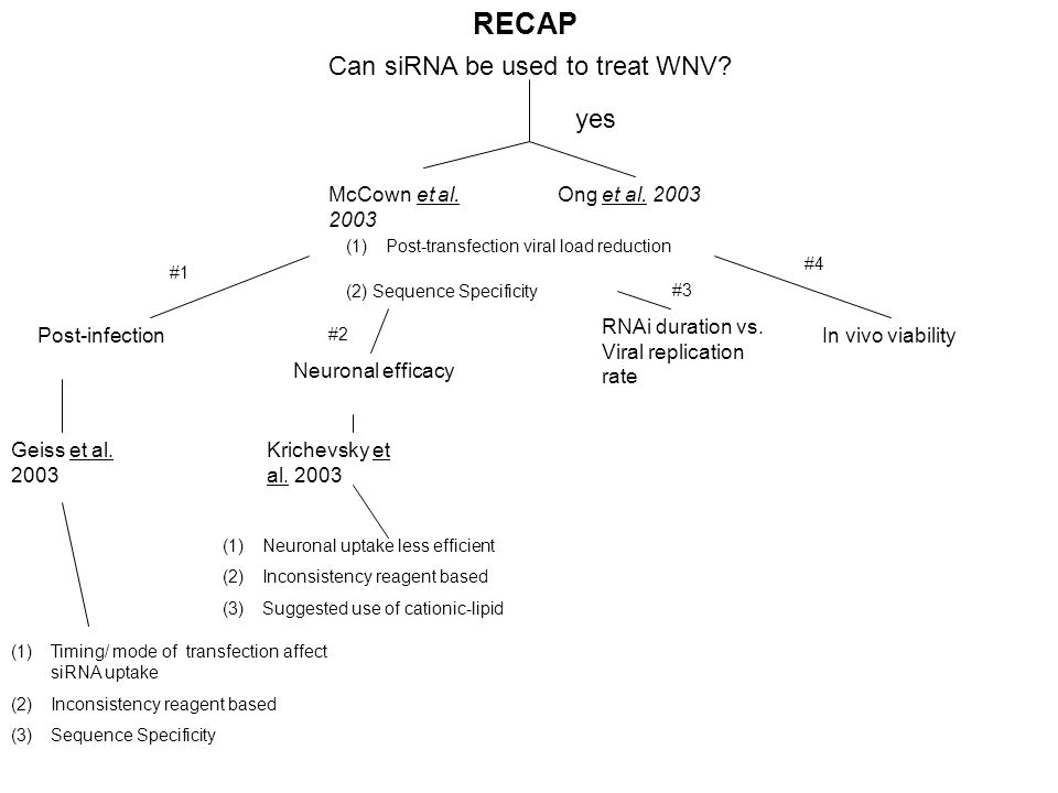 Can siRNA be used to treat WNV? yes Post-infection Ong et al. 2003 (1)Post-transfection viral load reduction (2) Sequence Specificity McCown et al. 20