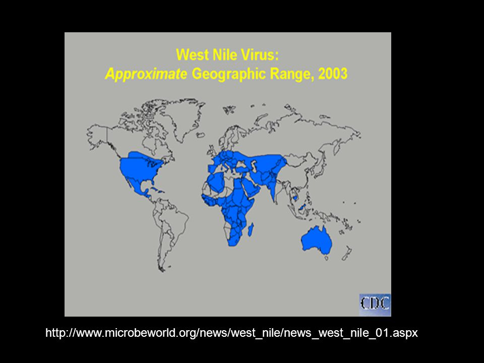http://www.microbeworld.org/news/west_nile/news_west_nile_01.aspx