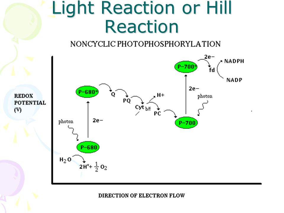 Q.Describe light reaction Light reaction or Hill reaction occurs in presence of light.