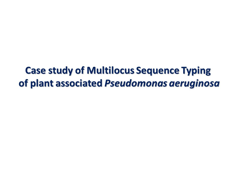 Case study of Multilocus Sequence Typing of plant associated Pseudomonas aeruginosa of plant associated Pseudomonas aeruginosa